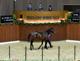 【セレクションセール2021(selection sale、1歳)】の「上場馬一覧」が公開